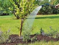 Особенности полива деревьев
