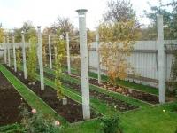 Полив винограда: как правильно поливать и когда