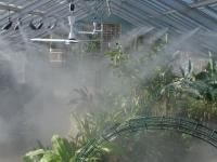 Искусственный туман для полива