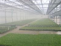 Туманообразующие системы для теплиц